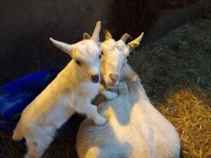 Grimsbury Farm welcomed a new kid after mum Dolly gave birth on January 15